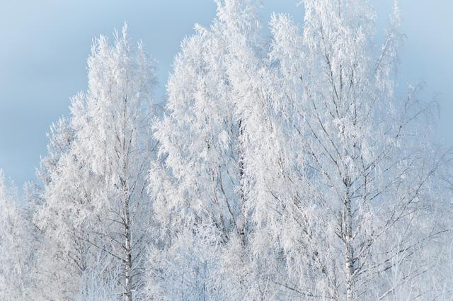 DSC_5469rimfrost